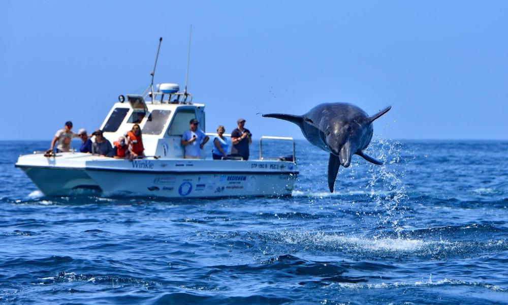 boat cruise, port elizabeth, dolphin, breaching