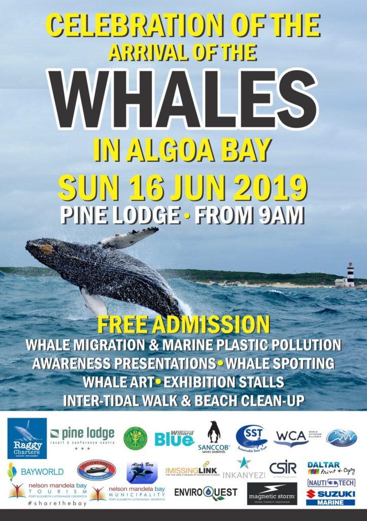 whale, festival, port elizabeth, pe, algoa bay, eastern cape, whales, humpback