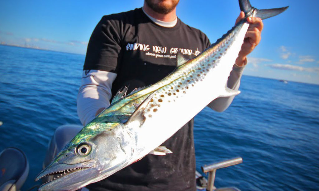 fishing, natal, snoek, pro, tips, trace, traces, line classes, lures, rods, line, IGFA, rules, strip bait, skirts, how to, watch, rig, what is, best time to catch, season, south africa, sa, george breedt, captain, team, sailfish, game fish, champion, derby, st lucia, kzn, kwazulu